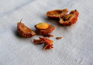 Öppnad persikokärna